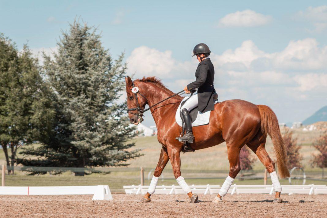 man in black helmet riding brown horse during daytime
